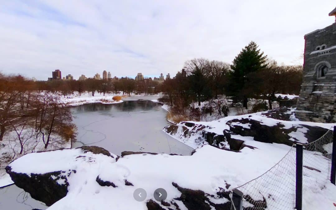 Take a Virtual Walk Around Turtle Pond