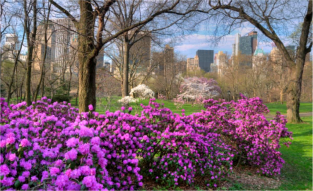Azalea Walk Central Park